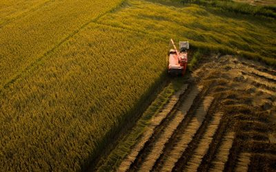 Agricoltura: cresce export per quella Biodinamica, + 14%