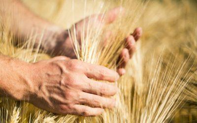 Agricoltura, vola l'export di Trento e Bolzano